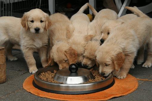 Feeding Hungry Puppies?
